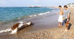 Tatilciler sahildeki manzarayı görünce neye uğradıklarını şaşırdı!