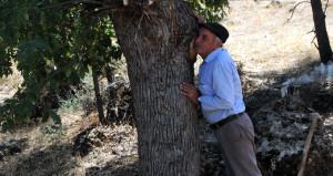 Tam bir uzman! Ağaçları dinleyip darphane gibi para basıyor