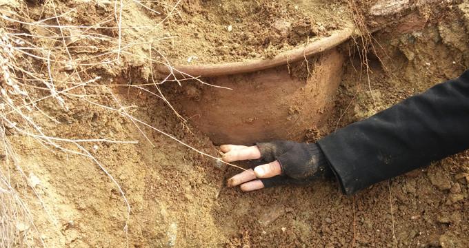 40 yıl önce ölen kişinin cesedini, midesindeki tohum ortaya çıkardı