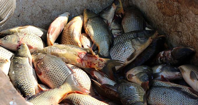 Denizi olmayan ilimizden Avrupa ve Orta Doğu'ya balık ihracatı