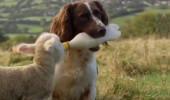 Köpeğin Kuzuyu Beslemesi, Sosyal Medyada Rekor Kırdı