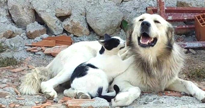 Herkes kedinin öfkeli olduğunu zannetti ama gerçek çok farklı!