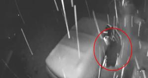 Ayının otomobil merakı, güvenlik kamerasına yansıdı