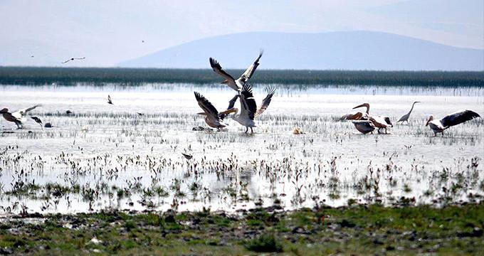 Türkiye'nin kuş cenneti haritadan silindi! Son hali yürek sızlatıyor