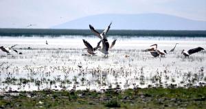 Türkiyenin kuş cenneti haritadan silindi! Son hali yürek sızlatıyor