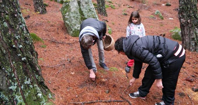 Köylünün geçim kaynağı oldu! Ormandan toplanıp Avrupa'ya ihraç ediliyor