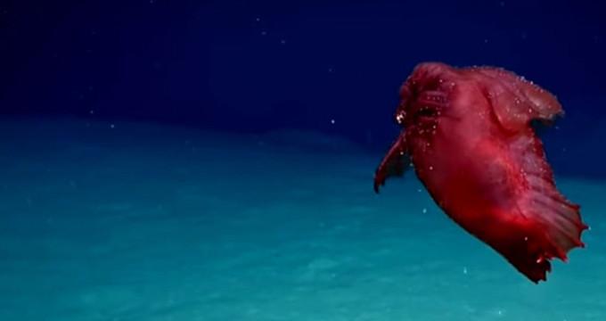 Bu yaratık ilk kez görüntülendi! Lakabı 'başsız tavuk canavarı'