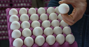 Yumurtada indirim uyarısı: Herkesin makul karla satması gerekiyor