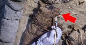 Mısır'da bulunan 6000 yıllık kedi mumyası şoke etti!