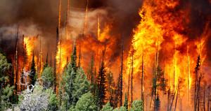 Yangınla mücadelede yeni dönem başlıyor! Gelecek yıl kullanılacak