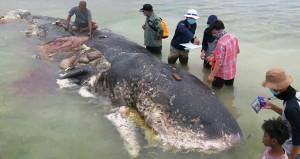 Kıyıya vuran balinanın içinden çıkanlar şoke etti!