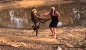 Köpeklerini korumak isteyen yaşlı adam, kangurudan dayak yedi
