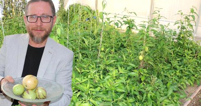 Şifa için dikti, gelir kaynağı oldu! Yılda 20 ton üretiyor