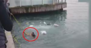 Kahramanlığın böylesi! Denize düşen kadını, hiç düşünmeden atladı