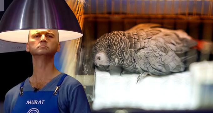 Psikopat Murat'ın işkence ettiği papağandan haber var