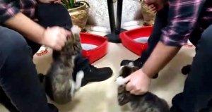 İş adamından kediye korkunç işkence! Kan donduran anlar kamerada