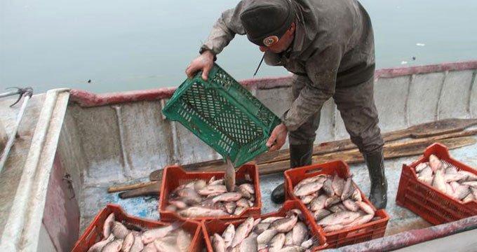 Ağlarını boş çeken balıkçıların umudu oldu! Kilosu 1 TL'den satılıyor