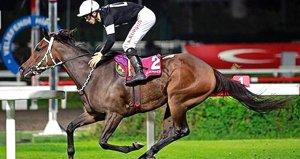 Şampiyon yarış atına icra geldi! 70 bin TL bedelle satışa çıkacak