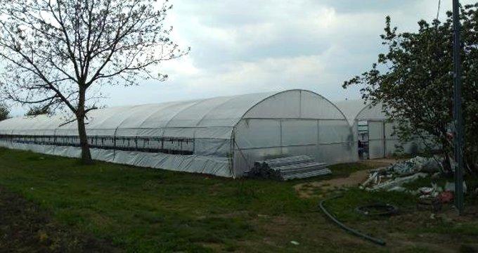 Sadece suyla yetiştiriyor! 45 günde 20 bin ürün elde ediyor