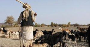 Çobanlarla çiftçiler arasında çatışma! Çok sayıda ölü var
