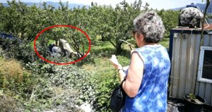 Korkunç manzarayı gören kadın, ellerini açıp dua etti