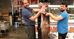 Baraj gölünde 100 kilo ağırlığında, 2 metre boyunda dev yayın balığı yakalandı