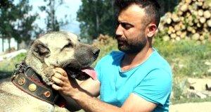 Anadolu çoban köpeklerinin yavruları doğmadan satılıyor