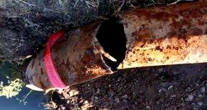 Su borusunu kıran çiftçi, içindekileri görünce neye uğradığını şaşırdı!