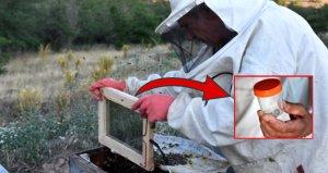 Arı zehrinin kilosu 500 bin liraya satılıyor