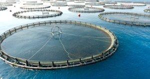 Barajlardaki su ürünlerinden ekonomiye yıllık 940 milyon liralık katkı