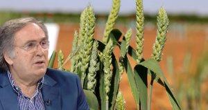 Cumhurbaşkanı Başdanışmanı Saraçoğlu: Ata tohumları 2020de ücretsiz dağıtılacak
