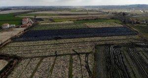 Geçen sene çiftçiye büyük kar bırakan mor lahana, bu yıl üreticinin elinde kaldı