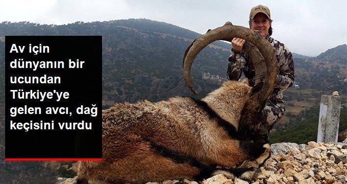 Av için dünyanın bir ucundan Türkiyeye gelen avcı, dağ keçisini vurdu