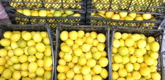 Limona olan talep artınca ihracatı ön izne bağlandı
