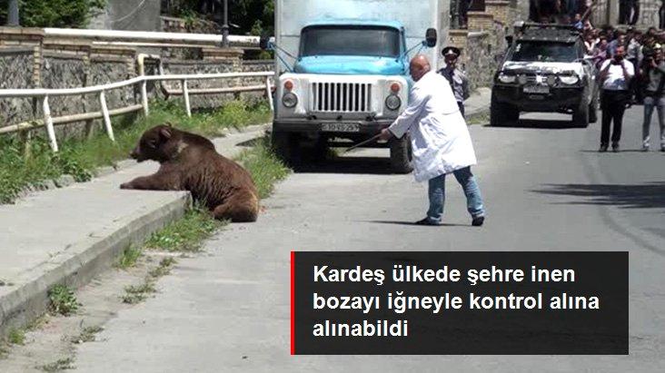 Azerbaycan'da şehre inen bozayı uyuşturucu iğneyle sakinleştirildi