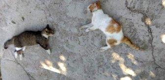 Edirne'de 12 kedi ve 3 köpek zehirli etle öldürüldü