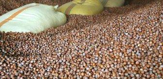 Fındık ihracatında rekor kırılarak 2 milyar 74 milyon dolar gelir sağlandı