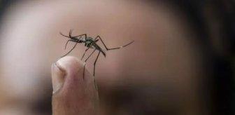 Koronavirüsü yenen Singapur'da deng humması başladı, 14 bin kişi enfekte oldu