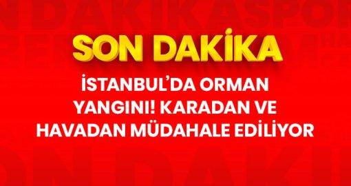 İstanbul'da orman yangını! Karadan ve havadan müdahale ediliyor
