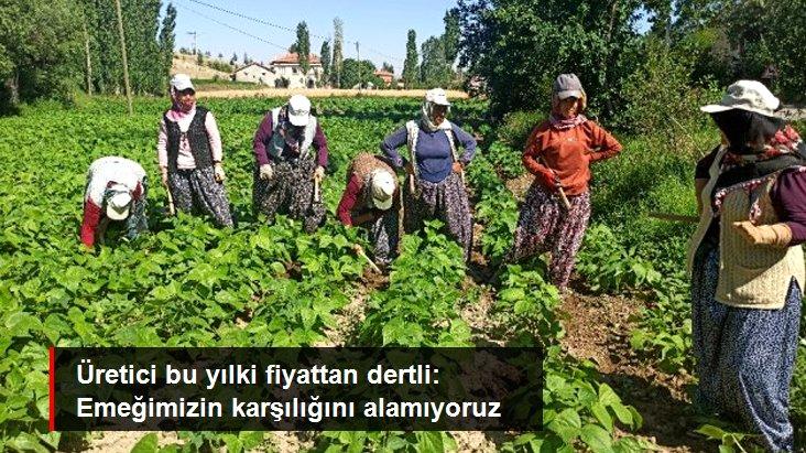 Afyonkarahisar'da ilk hasadı yapılan fasulyenin satış fiyatı üreticisini memnun etmedi