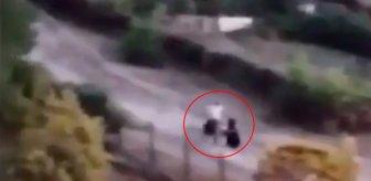 İstanbul'da sokak köpeklerini besleyen kadını, baba ile kızı darbetti