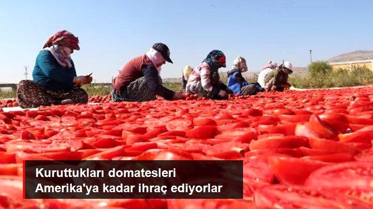 Elazığ'dan başta Amerika olmak üzere dünya sofralarına 1000 ton kurutulmuş domates