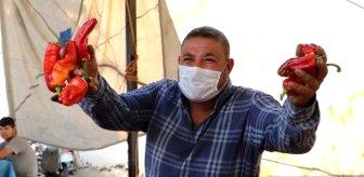 'Acı biber koronavirüsten koruyor' iddiasıyla ilgili açıklama: Bu yanlış bir algıdır