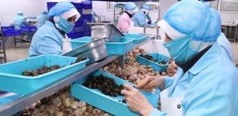 Bilecik'te üretilip yıllık 700 ton ihraç ediliyor! Avrupa'da porsiyonu 750 lira