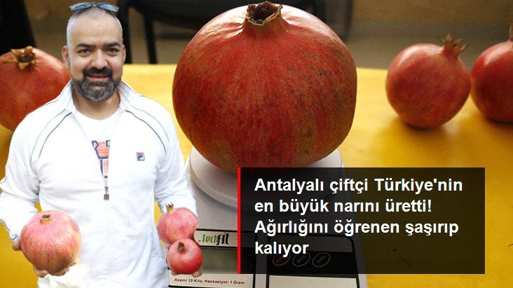 Antalyalı çiftçi Türkiye'nin en büyük narını üretti: 1 kilo 649 gram