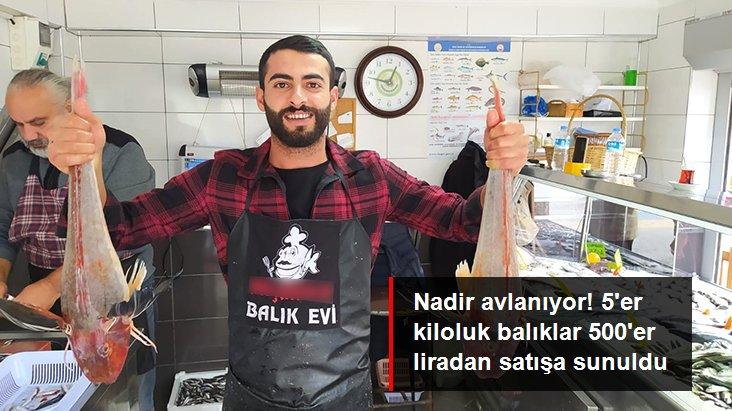 5'er kiloluk kırlangıç balıkları 500'er liradan satışa sunuldu
