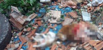 İstanbul'un ortasında vahşet! 4'ü yavru 7 kedi parçalanmış halde bulundu