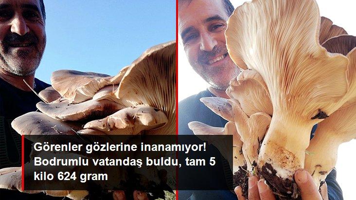 Görenler gözlerine inanamıyor! Bodrumlu vatandaş 5 kilo 624 gram ağırlığında mantar buldu
