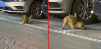 Bacakları ters kediyi görenler görenler gözlerine inanamıyor! Sebebi ise çok daha korkunç