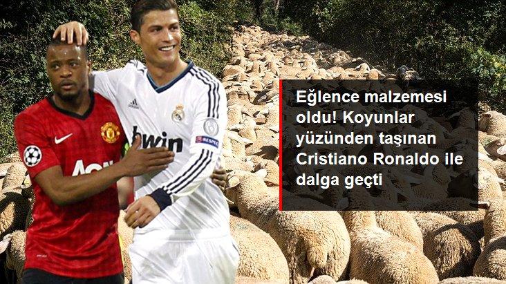 Eğlence malzemesi oldu! Koyunlar yüzünden taşınan Cristiano Ronaldo ile dalga geçti